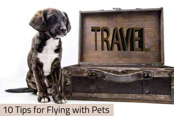 10 Tips for Flying with Pets